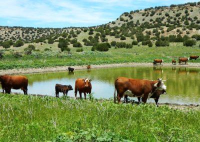 Deer Canyon Pond